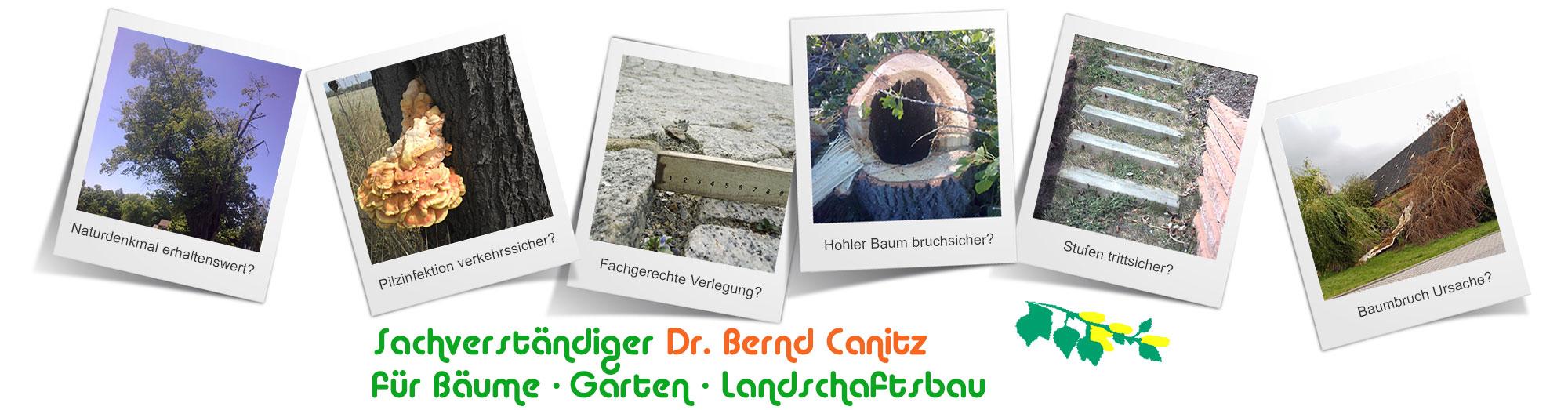 Sachverstandiger Baume Garten Und Landschaftsbau Leipzig